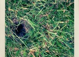 Eek!  Cicada Hole?